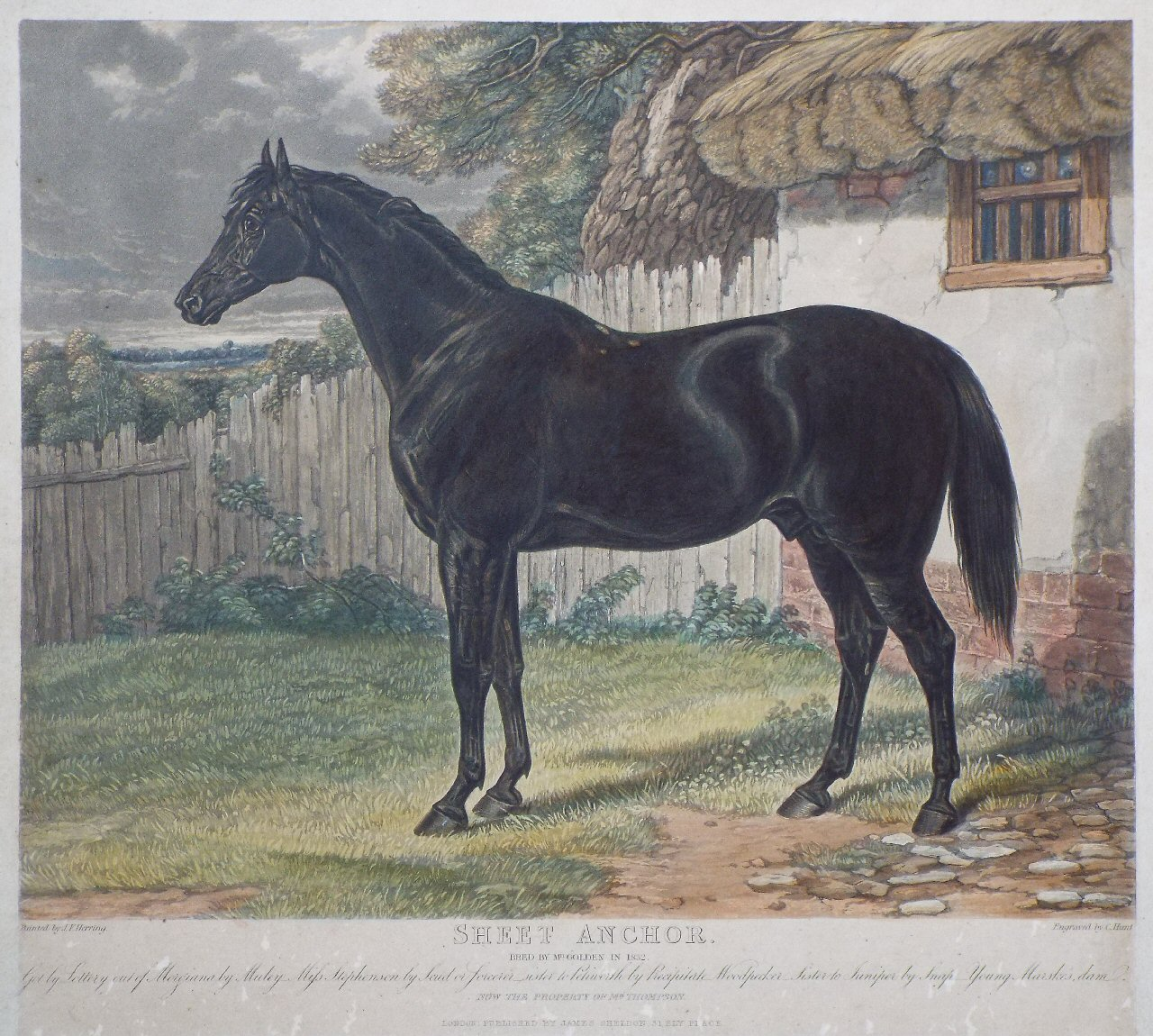 Aquatint - Sheet Anchor. Bred by Mr. Golden in 1832. - Hunt