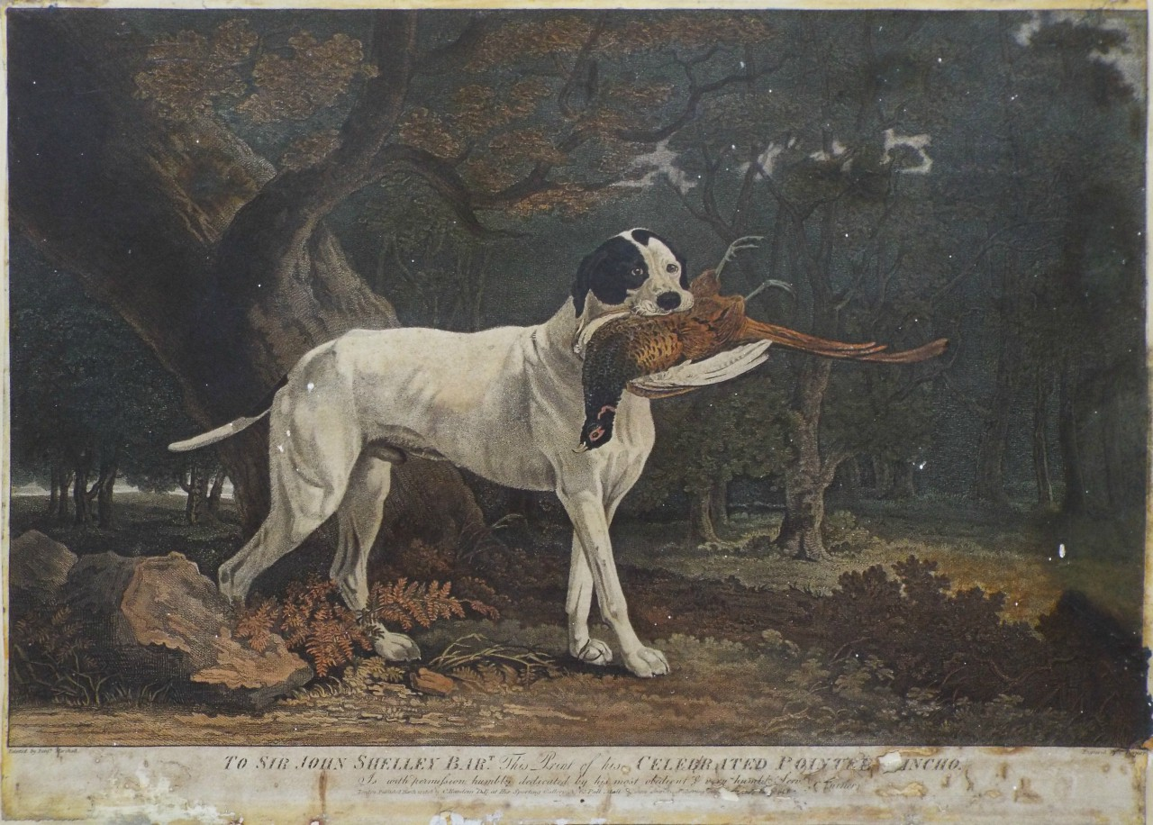Lithograph - The Celebrated Pointer Sancho. - Turner