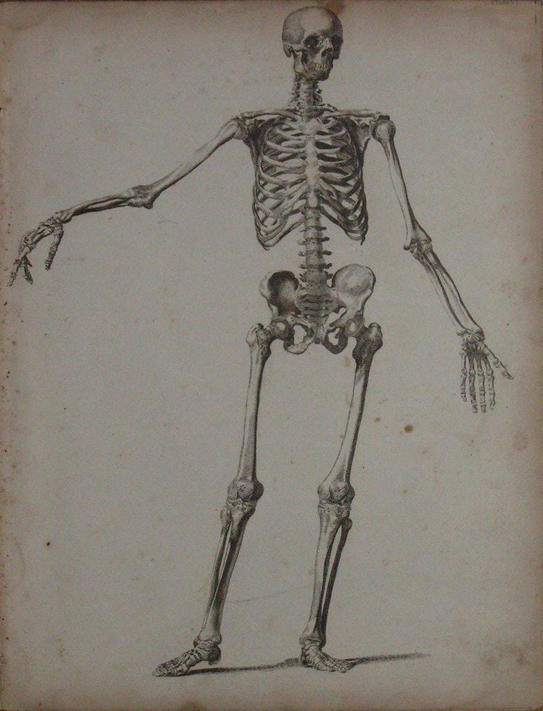 Anatomy Skeleton Drawing Skeleton Drawing Reference