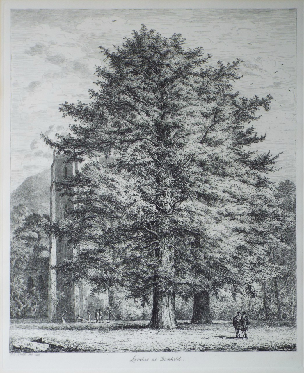 Lithograph - Larches at Dunkeld. - Strutt